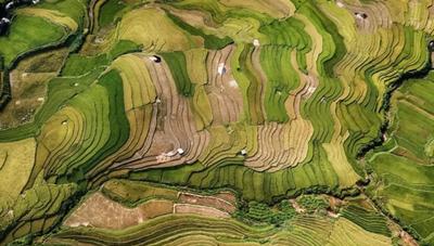 Việt Nam giành HCV cuộc thi ảnh quốc tế