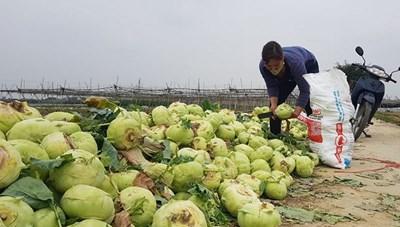 Căn cơ giải cứu nông sản