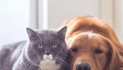 Đánh đập chó mèo bị phạt lên đến 3 triệu đồng