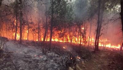 Cấp bách phòng, chống cháy rừng