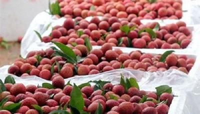 Xuất khẩu nông, lâm, thủy sản tăng mạnh