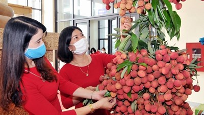 Thúc đẩy tiêu thụ nông sản trên nền tảng số
