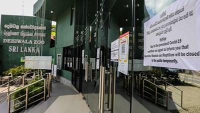 Vườn thú Sri Lanka ghi nhận trường hợp sư tử mắc Covid-19