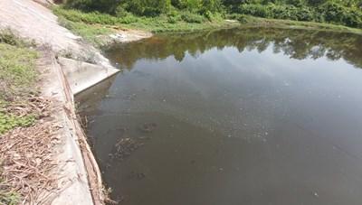 Trại lợn ngàn con gây ô nhiễm nguồn nước