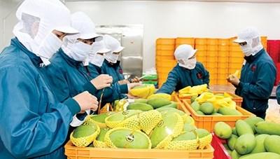 Xuất nhập khẩu nông, lâm, thủy sản ước đạt gần 46 tỷ USD