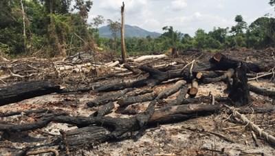 Gia Lai: Khởi tố 2 Trưởng ban Quản lý rừng phòng hộ