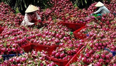 Thời cơ mới cho nông sản Việt