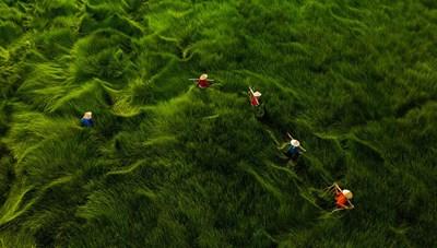 Nhiếp ảnh gia Việt Nam giành giải cuộc thi ảnh trên không