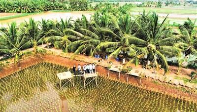 Phát triển du lịch sinh thái Đồng bằng sông Cửu Long:  Nguồn sinh kế mới cho người dân