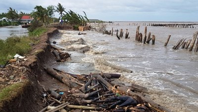 Đê biển Tây xuất hiện nhiều đoạn sạt lở nghiêm trọng