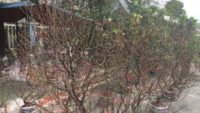 Quảng Ninh: Vận động giải cứu hoa tết cho nông dân vùng dịch Đông Triều