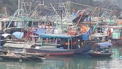 Quảng Ninh: Cấm neo đậu phương tiện thủy tại khu vực vùng đệm ven bờ Vịnh Hạ Long kể từ ngày 4/3