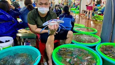 Vắng khách du lịch, hải sản Quảng Ninh rẻ chưa từng có