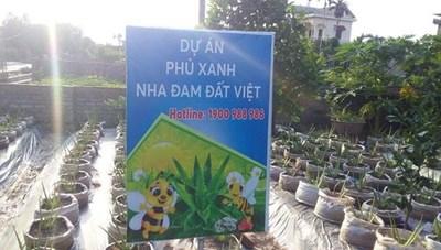 Hải Dương: Chỉ đạo làm rõ những bất thường tại dự án trồng cây nha đam