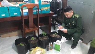 Thiếu niên 15 tuổi mua hạt cần sa trên Facebook về 'trồng thử'?