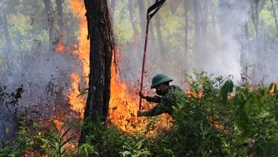 Thừa Thiên – Huế: Liên tiếp xảy ra các vụ cháy rừng nghiêm trọng