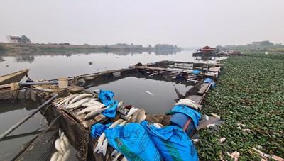 Hàng chục tấn cá lồng chết ở sông Cầu, Phòng Nông nghiệp, Chi cục Bảo vệ Môi trường nói gì?