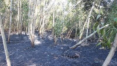 Quảng Nam: Liên tiếp xảy ra cháy rừng