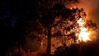 Người dân Hy Lạp đối diện bóng ma từ trận cháy rừng thảm khốc