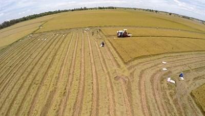 Thanh Hoá: Tích tụ ruộng đất để hiện đại hoá nền nông nghiệp