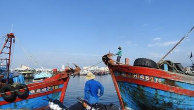 Đà Nẵng: Đóng cửa cảng cá lớn nhất miền Trung