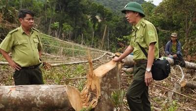 Quảng Trị:  Lâm tặc đập phá xe máy của nhân viên bảo vệ rừng