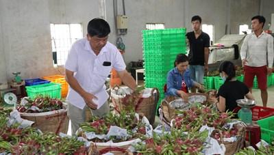 Bứt phá xuất khẩu trái cây