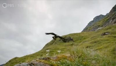 [VIDEO] Đàn sóc bị đại bàng truy đuổi trên dãy Alps