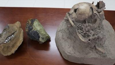 Việt Nam tách chiết thành công ADN của xương động vật cổ đại