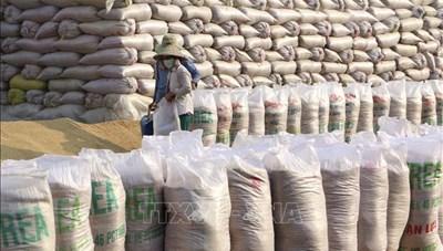Đảm bảo công bằng trong đấu thầu mua gạo dự trữ quốc gia