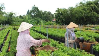 Ninh Thuận: Tổng kết Chương trình Mục tiêu Quốc gia XD nông thôn mới năm 2020 tại huyện Ninh Hải