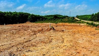 Quảng Trị: Phân lô bán nền đất trồng rừng
