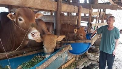 Khẩn trương phòng chống dịch bệnh trên đàn gia súc