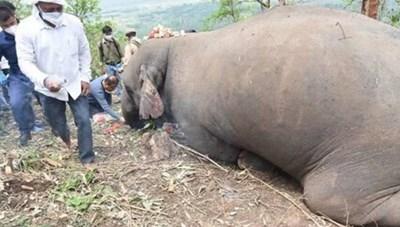 [VIDEO] Kinh hoàng cả đàn 18 con voi mất mạng vì sét đánh ở Ấn Độ