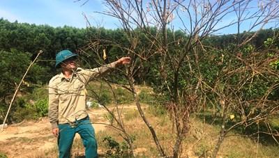 Hà Tĩnh: Cây héo, người khô vì nắng hạn