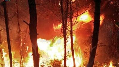 Yêu cầu điều tra, truy tìm thủ phạm gây ra các vụ cháy rừng