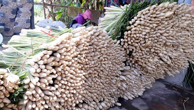 Tiền Giang: Tăng giá trị cho cây sả
