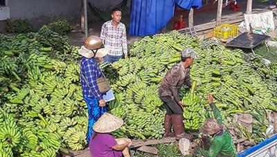 Nông sản ách tắc, tư thương đẩy giá