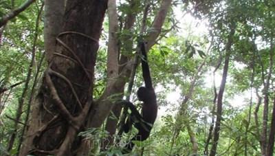 Thả nhiều cá thể động vật quý hiếm về rừng tự nhiên