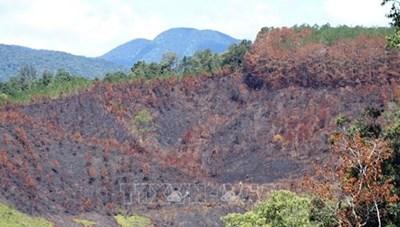 Kỷ luật khiển trách 3 cán bộ liên quan vụ cháy rừng tại Kon Tum