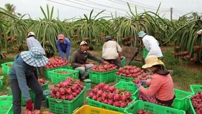 Khơi thông xuất khẩu trái cây sang Mỹ