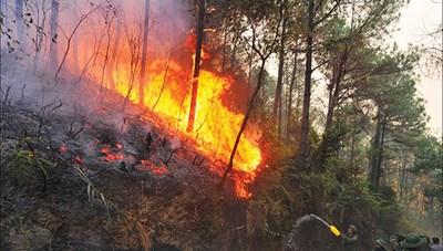 Nhiều nơi cháy rừng chưa rõ nguyên nhân