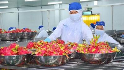 Khi nông sản Việt tiến vào EU