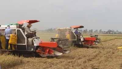 Để nông dân sản xuất có lãi