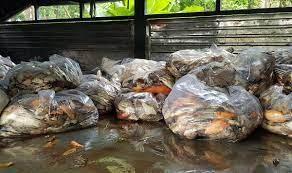TP Hồ Chí Minh: Cá chết hàng loạt ở hồ công viên Hoàng Văn Thụ