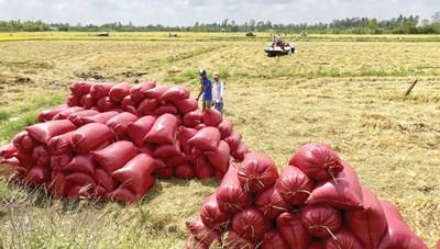 Phát triển thế mạnh nông nghiệp hữu cơ