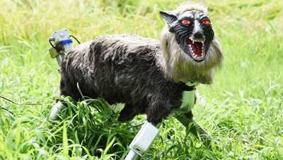 Robot 'quái vật sói' khiến lũ gấu hoảng hồn