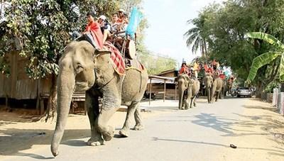 Du lịch thân thiện với voi