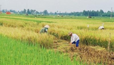 Thủ tướng: Bảo đảm an ninh lương thực quốc gia là nhiệm vụ đặc biệt quan trọng