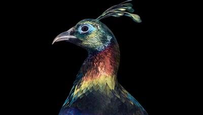 [ẢNH] TOP 25 loài chim quý hiếm và tuyệt đẹp